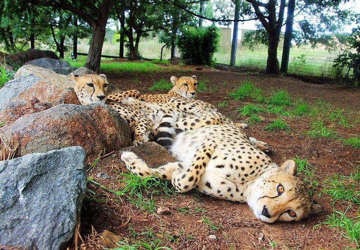 Nacional'nyj zoopark i akvarium